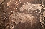 Petroglyph,Twyfelfonstein Region, Namibia