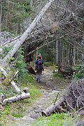 Hikers travel through a blowdown patch on the Asquam Ridge Trail in the White Mountains, New Hampshire USA during the summer months