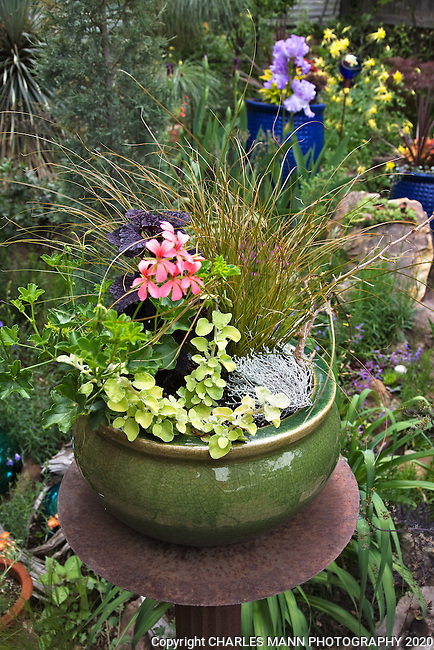 A container with a sedge and other interesting textures seems right at home floating over the  colorful garden that Dan Johnson has created in his Denver backyard.