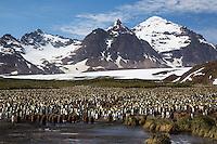 Antarctica - South Georgia