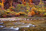Fall colors in Zion National Park along the Virgin River at the temple of Sinawava.