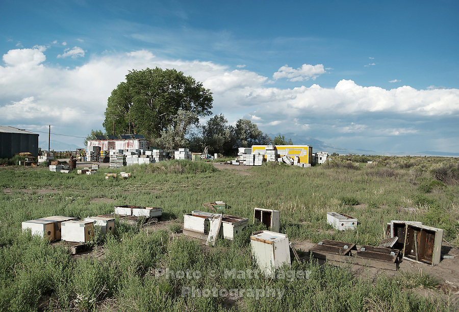 Brent Edelen's (cq) bees near his warehouse in Alamosa, Colorado, June 1, 2012. Bee keeping has been in Edelen's family for over six generations, originating in Switzerland...Photo by MATT NAGER