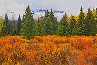 Autumn colrs at Hillside Meadows in the Bow Valley<br />Banff National Park<br />Alberta<br />Canada