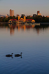 Canada Geese and owntown skyline from City Park, Denver, Colorado, USA. .  John leads private, wildlife photo tours throughout Colorado. Year-round. .  John offers private photo tours in Denver, Boulder and throughout Colorado. Year-round Colorado photo tours.