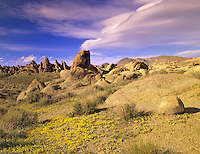 Yellow flowers and lenticular clouds in Alabama Hills, California