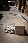 Street dog dozes in the afternoon sun, Trapani, Sicily, Italy. (c) 2013 davewalshphoto.com