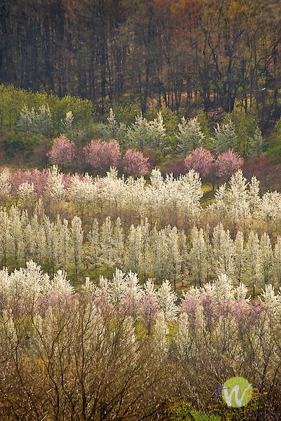 Blooming hillside nursery, Bloomingrove Road, Williamsport, PA.