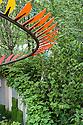 Bradstone Panache Garden, Caroline E. Butler, RHS Chelsea Flower Show 2012. Wild strawberries in front of Common Hazel (Corylus avellana).
