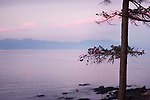 Pine tree silhouette over misty pink sunset sky with mountains in the background. Strait of Georgia, Salish Sea, Pacific Ocean in Nanaimo, Vancouver Island, BC, Canada. Image © MaximImages, License at https://www.maximimages.com