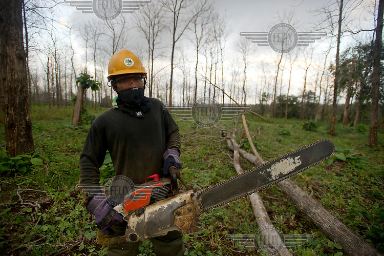 A worker wields a chain saw in a teak plantation owned by PT Perhutani on the island of Java.