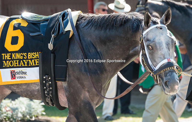 SARATOGA SPRINGS - AUGUST 27: Mohaymen #6 is walked in the paddock before Ketel One King's Bishop Stakes on Travers Stakes Day at Saratoga Race Course on August 27, 2016 in Saratoga Springs, New York. (Photo by Dan Heary/Eclipse Sportswire/Getty Images)