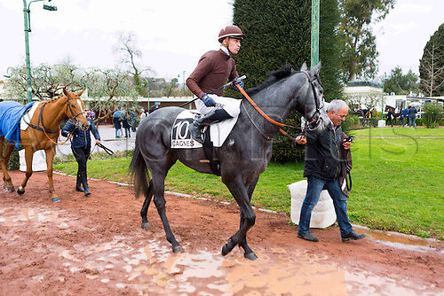 27.02.2016. Cagnes sur Mer, France. 3rd Race of the day Prix Jacques Bouchara.   10 POSTER, T. PICCONE