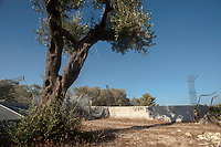 Puglia, Salento, Melendugno, area del cantiere dove sono stati espiantati gli ulivi per la costruzione del terminale di ricezione del gasdotto Trans Adriatic Pipeline.Puglia, Salento, Melendugno, the site where the olive trees were explanted for the construction of the Trans Adriatic Pipeline gas pipeline terminal.