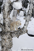 Family pet dog in a tree in winter