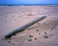 Driftwood on the shore of Lake Michigan; Warren Dunes State Park, MI