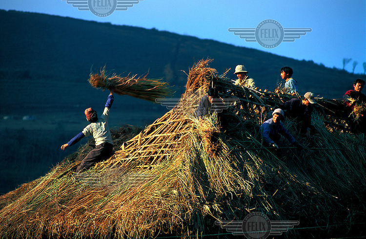 Rice farmers around the Yuanyang rice terraces repair the roof of a house during the winter months when there is little work to be done in the fallow rice fields.