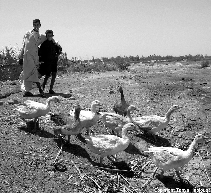 21st of July, 2003. Chibayish, Thi Qar Province, Iraq.