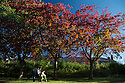 02/10/16 <br /> <br /> After a chilly night, Derek Deakin, pushes his three-year-old son Jack on his bike past stunning autumn colours in Darley Dale in the Derbyshire Peak District this morning. <br /> <br /> All Rights Reserved: F Stop Press Ltd. +44(0)1773 550665   www.fstoppress.com