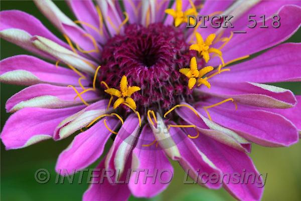 Gisela, FLOWERS, photos(DTGK518,#F#) Blumen, flores, retrato