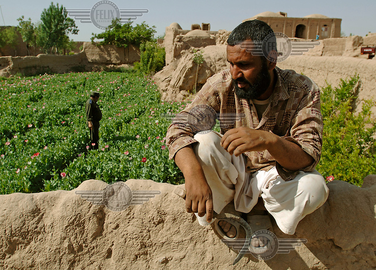 A disillusioned farmer sits on the fence surrounding his opium poppy field, waiting for it to be eradicated. Behind him a police officer inspects his crops. The Afghan government has started an eradication campaign that aims to deter farmers from growing poppies. However, since growing poppies is often the only means of an income for many farmers, and alternatives are scarce, farmers still take their chances on a massive scale. In spite of the efforts of the government, Afghan opium production remains the highest in the world.