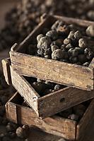 Europe/Europe/France/Midi-Pyrénées/46/Lot/Cahors: Truffes du Périgord ,Tuber Melanoporum, à la Maison Pebeyre