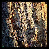 The afternoon sun shines on dead tree bark in the Wissahickon near the Henry Avenue Bridge on December 5, 2012.