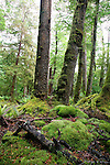Beech forest, Kepler Track, Fiordland, New Zealand