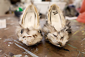 "April 11, 2011. Raleigh, NC.. Two found opossums create the shoes for the ""Roadkill Dress"" ensemble. . Veronica Tibbitts, a senior in the NCSU School of Design, has used found roadkill to construct some of her designs for the school's annual Art to Wear fashion show. Tibbitts taught herself to skin and cure the animals and then incorporated them into her ideas for the show.."
