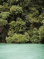 Mangrove at a hidden lagoon at Farondi, Misool, Raja Ampat, West Papua, Indonesia