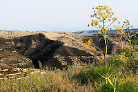 Stock photo: Landscape of hills in the south of Cyprus with weeds and flowers in the foreground.