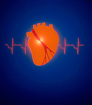 model of heart with electrocardiogram