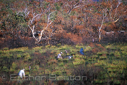 Chris McGregor and assistants dig pit traps for fire ecology study in bushfire-damaged heath.  Booderee National Park, Jervis Bay, NSW