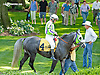In X Hess in the paddock before The Valour Farms Arabian Stakes at Delaware Park on 7/6/13