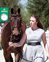 LEXINGTON, KY - April 26, 2017. #17 Rise Against and Bunnie Sexton from the USA at the Rolex Three Day Event First Horse Inspection at the Kentucky Horse Park.  Lexington, Kentucky. (Photo by Candice Chavez/Eclipse Sportswire/Getty Images)