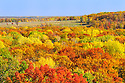 00440-010.10 Fall Color: Mix of mostly oak, aspen and birch are in peak of color.  Meadow in background. Mix of wildlife habitat. Brilliant, colorful.