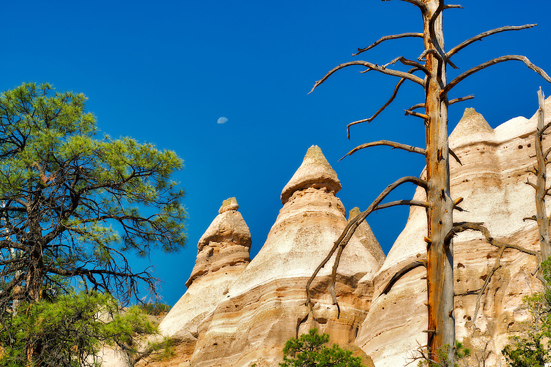 Dead tree, moon and rock formations in Tent Rocks National Monument, New Mexico