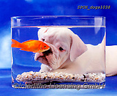 Xavier, ANIMALS, REALISTISCHE TIERE, ANIMALES REALISTICOS, dogs, photos+++++,SPCHDOGS1038,#a#, EVERYDAY