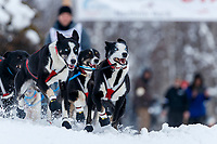 Charlie Bejna lead dogs charge down the chute during the restart of the 2019 Iditarod race in Willow, Alaska.<br /> <br /> Photo by Jeff Schultz/  (C) 2019  ALL RIGHTS RESERVED