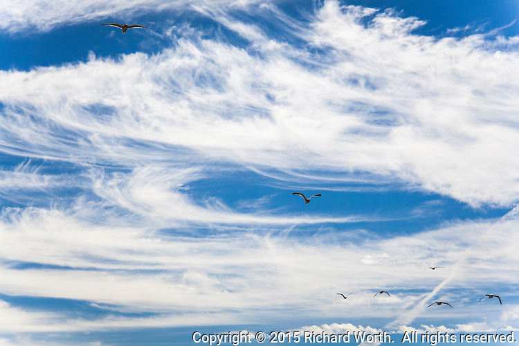A blue sky with streaming and swirling clouds is like a sentence or even a paragraph - and the birds provide punctuation.  Here, gulls offer exclamation points in the sky over San Francisco Bay.