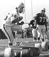 Oakland Raider lineman Mickey Marvin working out.<br />(1977 photo/Ron Riesterer)