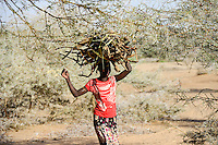 KENYA Turkana, Turkana woman carry firewoods which is used as cooking fuel / KENIA Turkana, Lodwar, Turkana Dorf Kaitese, junge Frau traegt Feuerholz