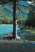 A raft nestles behind a tree at a campsite along Alaska's Kenai River.