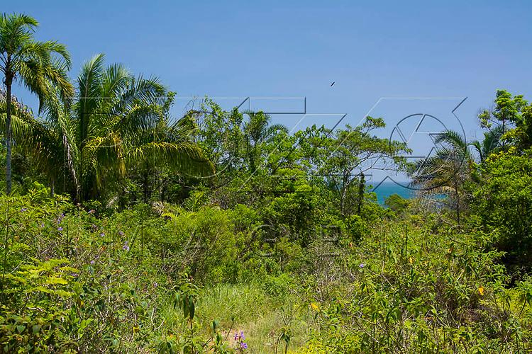 Vegetação de mata atlântica na Praia do Sono, Paraty - RJ, 01/2016.
