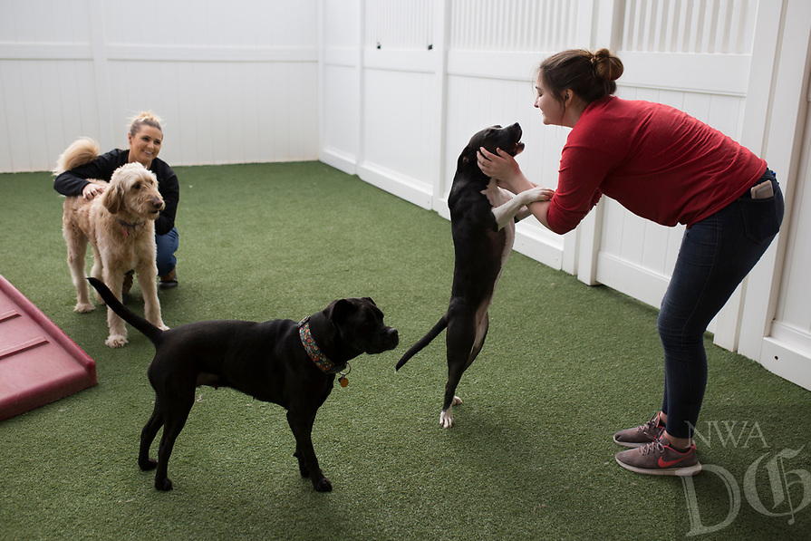 NWA Democrat-Gazette/CHARLIE KAIJO Camp Counselor Jordyn Holtz and Camp Scout Emily Enslow (from right) play with dogs, Sunday, January 6, 2019 at Camp Bow Wow Bentonville in Bentonville. <br />