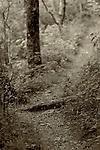 July 2010:  A hiking trail near the Pisgah Inn, Pisgah National Forest, Brevard, North Carolina.