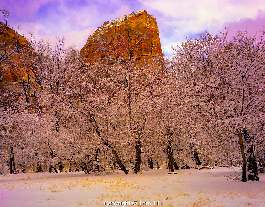 Winter sun  peaks out on Angels Landing  Zion National Park, Utah  Zion Canyon   Cottonwood and Gambel oak trees