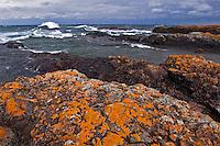 Orange lichens cling to the Keweenaw Peninsula shoreline as large Lake Superior waves crash near Copper Harbor.