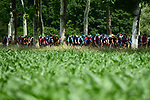 The peleton of 144 riders in action during Stage 4 of the 2018 Criterium du Dauphine 2018 running 181km from Chazey sur Ain to Lans en Vercors, France. 7th June 2018.<br /> Picture: ASO/Alex Broadway | Cyclefile<br /> <br /> <br /> All photos usage must carry mandatory copyright credit (© Cyclefile | ASO/Alex Broadway)