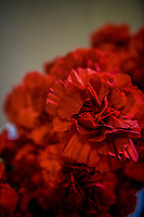 Close-up Carnations