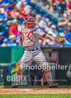 25 August 2013: Washington Nationals catcher Wilson Ramos in action against the Kansas City Royals at Kauffman Stadium in Kansas City, MO. The Royals defeated the Nationals 6-4, to take the final game of their 3-game inter-league series. Mandatory Credit: Ed Wolfstein Photo *** RAW (NEF) Image File Available ***